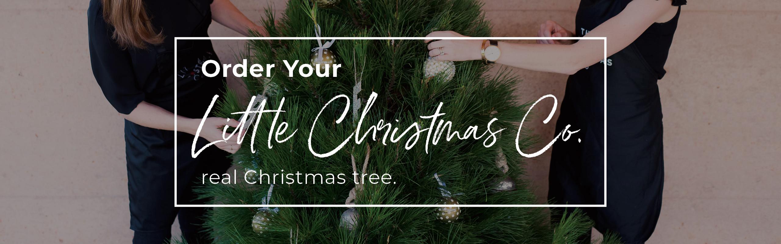 Christmas Trees01