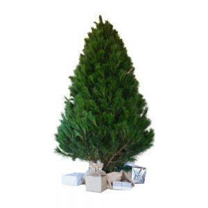 Christmas Tree 02